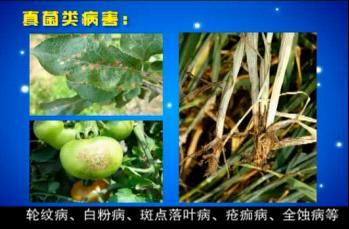 植物病害速测仪